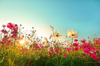 fleurs-printemps.jpg