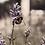 Thumbnail: Bumble lavender (6x8)