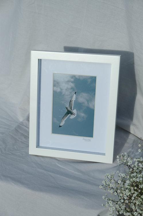 Sligo seagull (5x7)