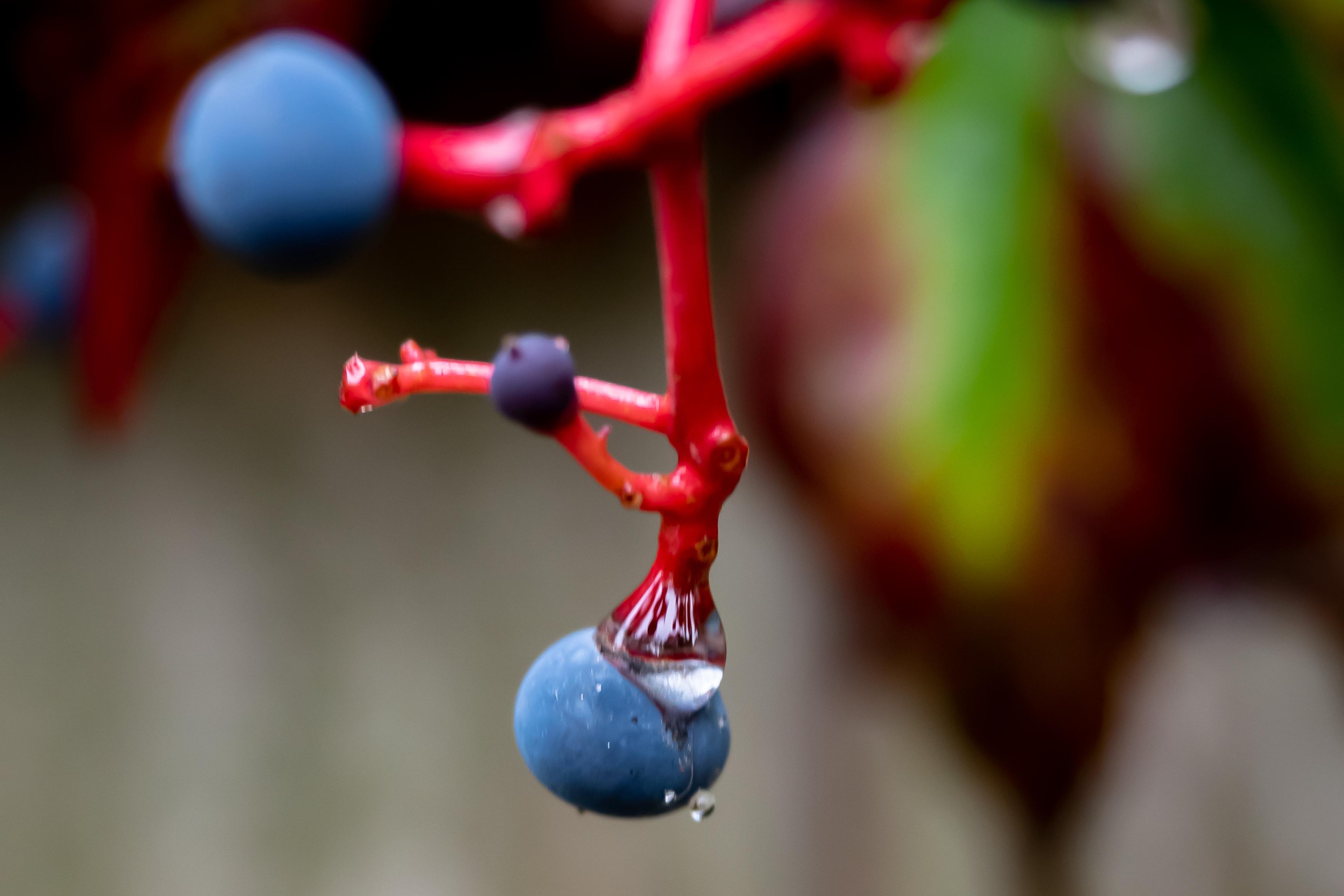 blue berry 2