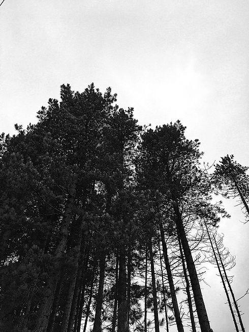 Tree Tops.jpg