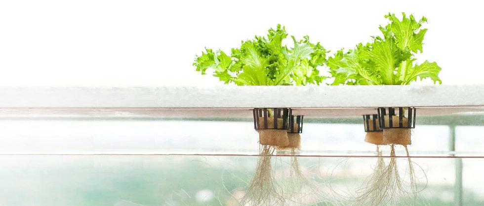 E.12b_dwc-hydroponics-e1459512409966-cop