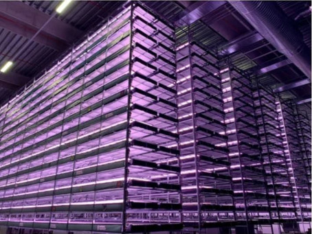 Vertical Farm In Denmark Will Produce 1K Tons Of Greens A Year