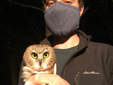 Research: First Owls and Listening to the Ozarks