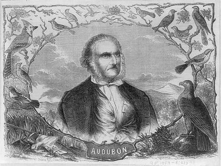 The Plight of Audubon