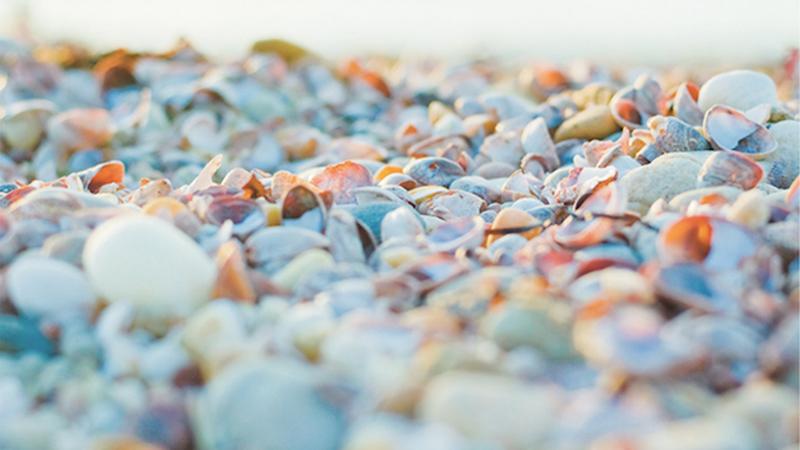 Pebbles & Shells V