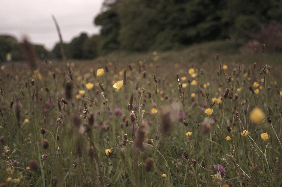 Wild%20flowers_edited.jpg