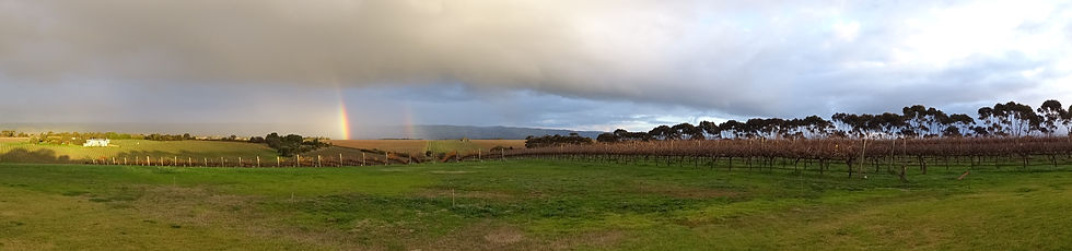 Rainbow vineyard.jpg