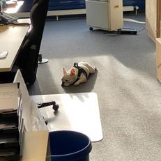 Zelda im Büro