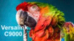 PBS Versalink C9000 Website.jpg