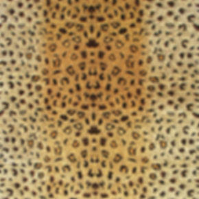 Tiger-skin-VS-1.jpg
