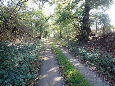 Ancient Bridleway from Duddington into F