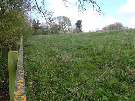 Sheep Field Entrance road.jpg