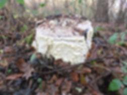 Fineshade Wood fungus