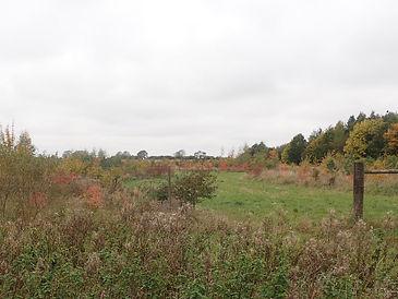 New planting Bulwick Estate (1).jpg