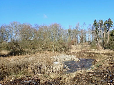Fineshade Wood Shoot pond