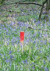 Fineshade Wood Forest Holidays stake