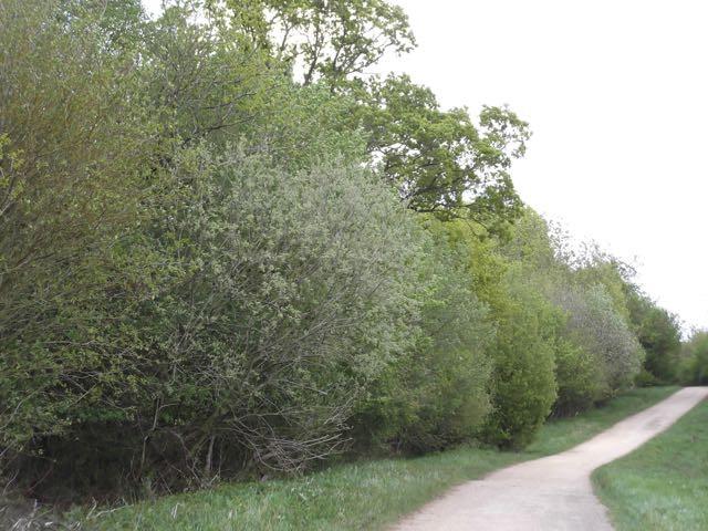 Greenwood 6.jpg