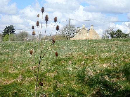 Sheep Field cfrom warden's site.jpg
