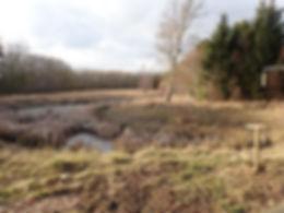 Fineshade Wood Hide Pond