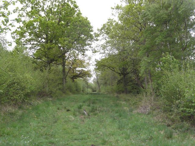 Greenwood 8.jpg