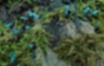 Green Elfcup 2 (1).jpg