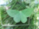 Fineshade Wood Large Emerald