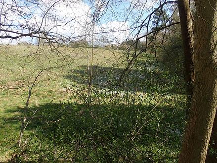 Sheep field camping area.jpg