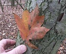 Fineshade Wood Wild Service