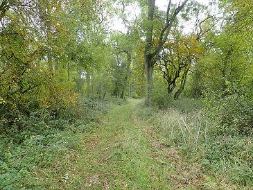 Spanhoe Wood.jpg