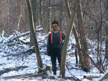 Timber! Fineshade Wood