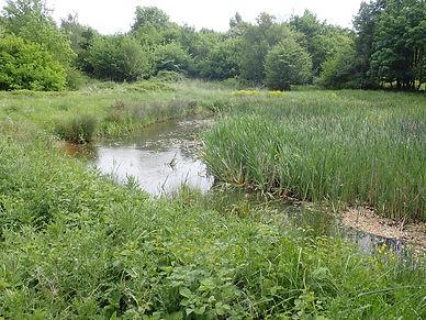 Shoot Pond.jpg