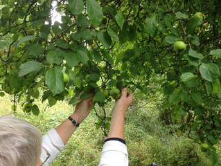 Come foraging in Fineshade