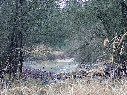Fineshade Wood Middle Pond before
