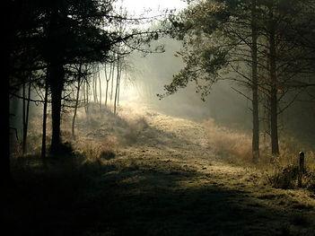 Fineshade Wood tranquillity