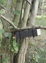 Fineshade wood dormouse tube