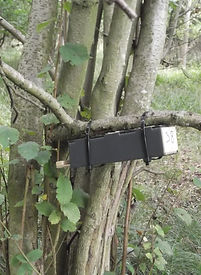 Fineshade Wood Dormouse survey