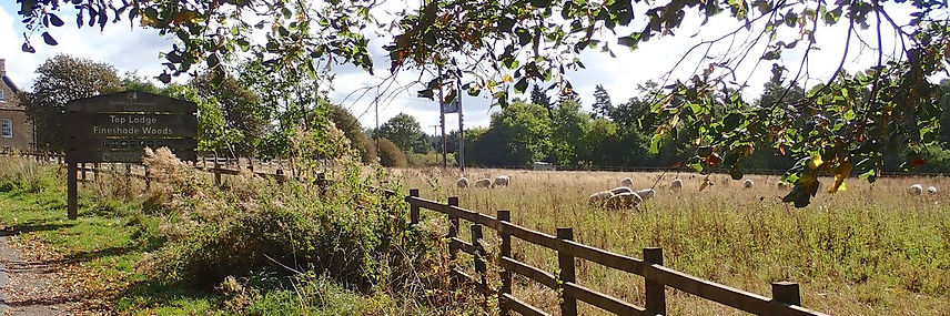 Sheep field, 608, in front of Top lodge