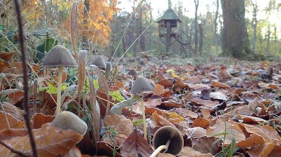 Fineshade Wood Fungus Tree House