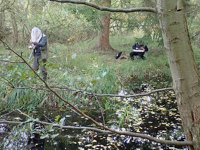 Aquatic surveying Fineshade wood