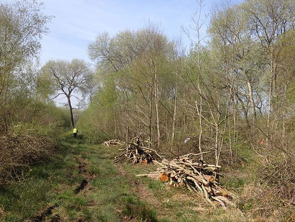 April in Fineshade Wood