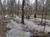 Floods in Fineshade Wood