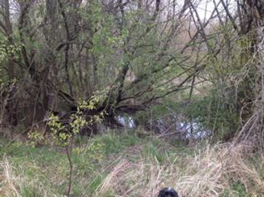 Fineshade Wood Smiths Spinney Pond