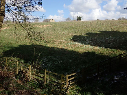 Badger's eye view of sheep field.jpg