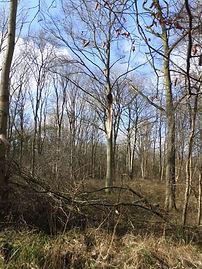 Fineshade Wood storm damage