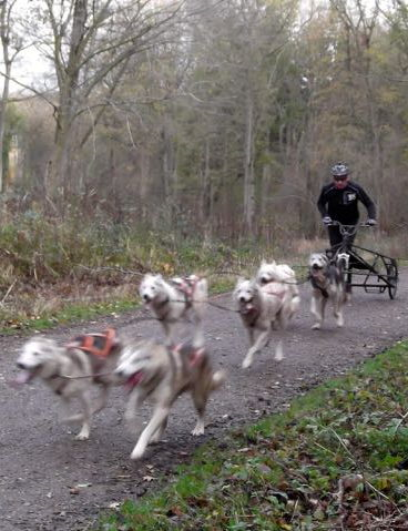 Yearly husky racing