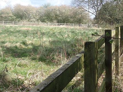 Sheep Field warden's site.jpg
