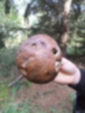 Fineshade Wood Penny Bun