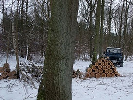Coppicing in the snow Fineshade Wood