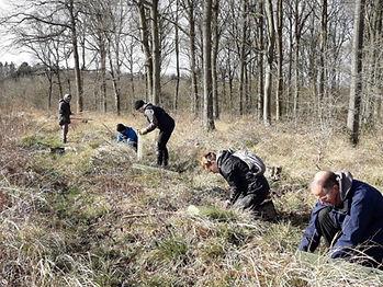 Elm planting.JPG